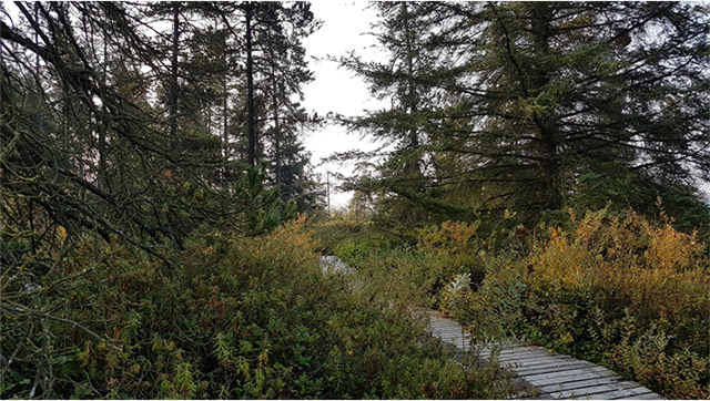 Management Plan Will Provide a Vision for Delta Nature Reserve, Delta South Surrey Greenway